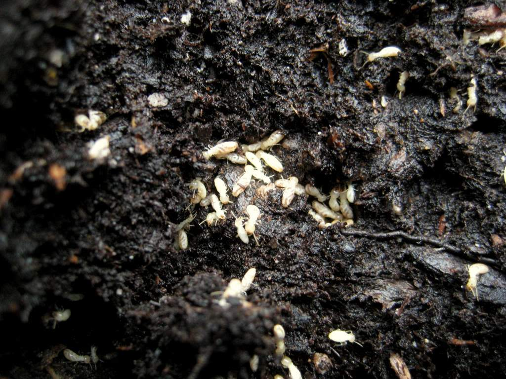 квартира подготовлена вредители комнатных растений в земле фото летают мимо тебя